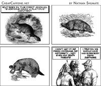 #570 Cartooning